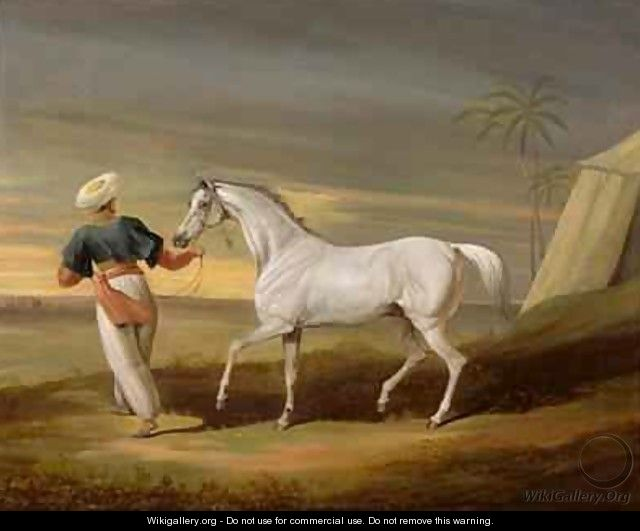 Signal a grey Arab with a Groom in the Desert - David of York Dalby
