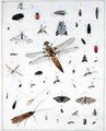 Various insects 2 - Georges Cuvier