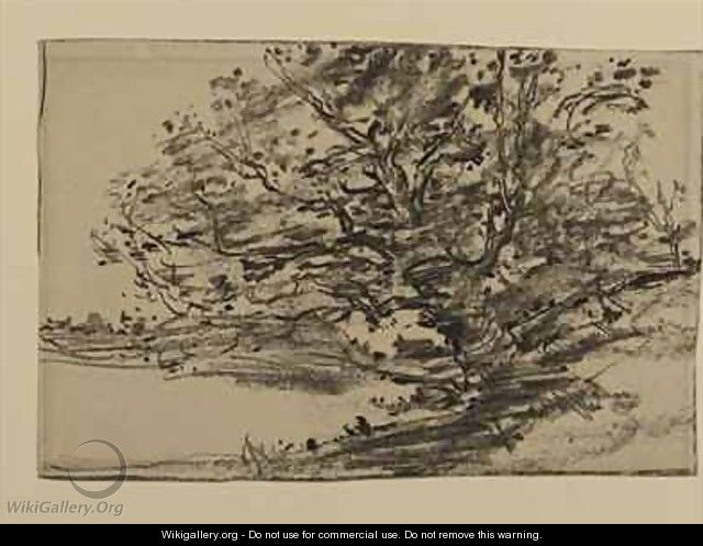 Study of Trees - J. Frank Currier