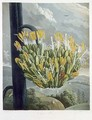 The Aloe, engraved by Medland, from The Temple of Flora by Robert Thornton, pub. 1798 - Philip Reinagle