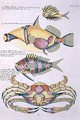 Three Fish and a Crab, plate 34 from Vol 2 of Fish, Crayfish and Crabs, pub. 1754 - (after) Renard, Louis