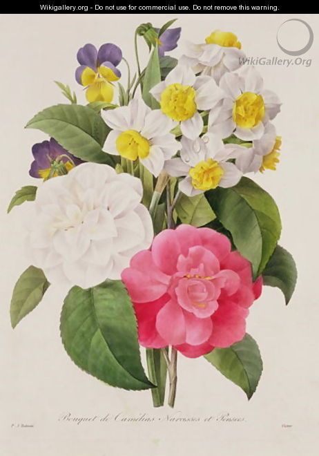 Camellias, Narcissus and Pansies, engraved by Victor, pub. 1827 - Pierre-Joseph Redouté
