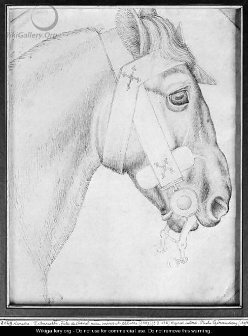 Head of a horse, from the The Vallardi Album 3 - Antonio Pisano (Pisanello)