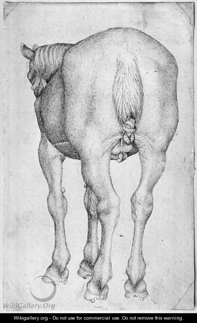 Horse, from the The Vallardi Album - Antonio Pisano (Pisanello)