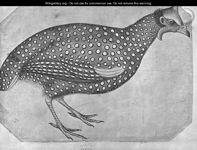 Guinea Fowl, from the The Vallardi Album - Antonio Pisano (Pisanello)