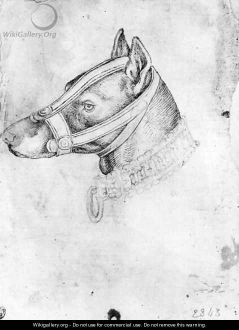 Head of a muzzled dog, from the The Vallardi Album - Antonio Pisano (Pisanello)