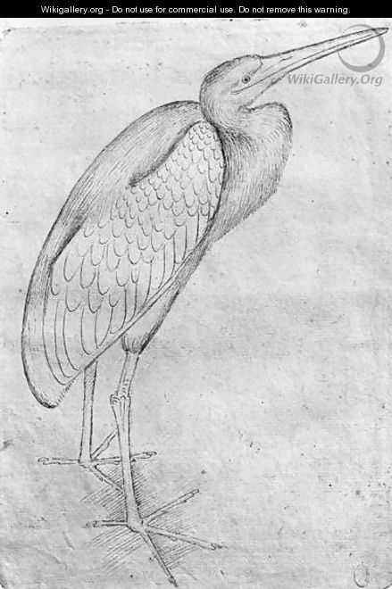 Pelican, from the The Vallardi Album - Antonio Pisano (Pisanello)
