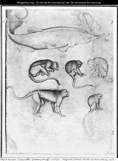 Six Monkeys and a Sturgeon, from The Vallardi Album - Antonio Pisano (Pisanello)