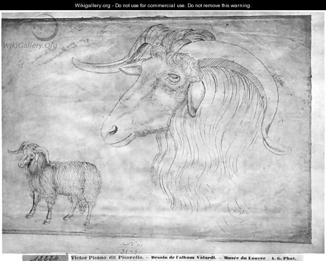 Ram and head of a ram, from the The Vallardi Album - Antonio Pisano (Pisanello)
