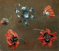 Poppies and Tradascanthus - Anonymous Artist