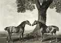 Two Hunters, engraved by G.T. Stubbs bap.1748-c.1815 - (after) Stubbs, George