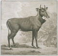 raved by James BasPlate of the Nyl-ghan, engire 1730-1802 - George Stubbs