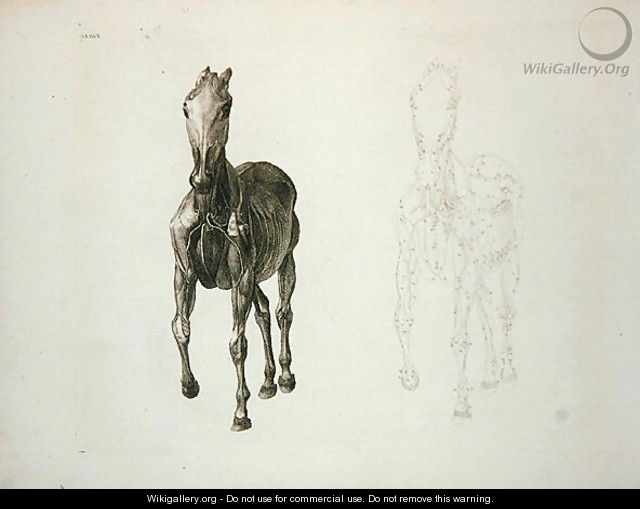 Tab Viii From The Anatomy Of The Horse 1766 George Stubbs
