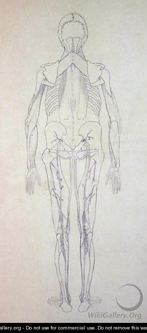 Study of the Human Figure, Posterior View, from A Comparative Anatomical Exposition of the Structure of the Human Body with that of a Tiger and a Common Fowl, c.1795-1806 5 - George Stubbs