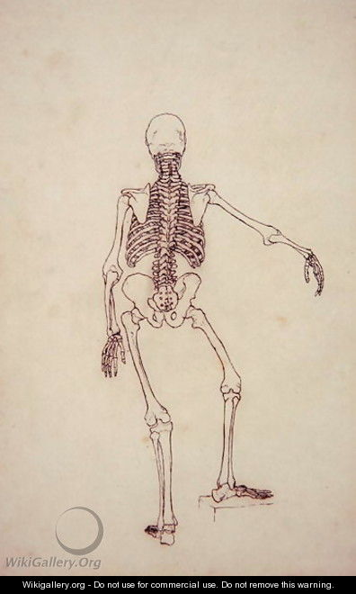 Study of the Human Figure, Posterior View, from A Comparative Anatomical Exposition of the Structure of the Human Body with that of a Tiger and a Common Fowl, 1795-1806 - George Stubbs