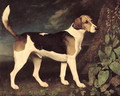 Ringwood, a Brocklesby Foxhound, 1792 - George Stubbs