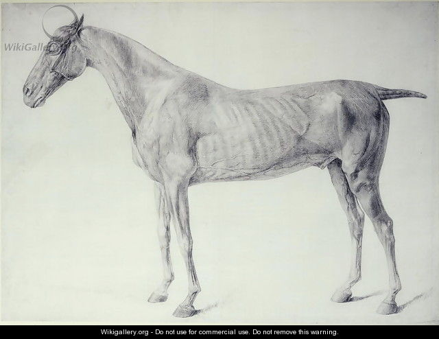 Diagram From The Anatomy Of The Horse 2 George Stubbs