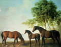 Shafto Mares and a Foal - George Stubbs