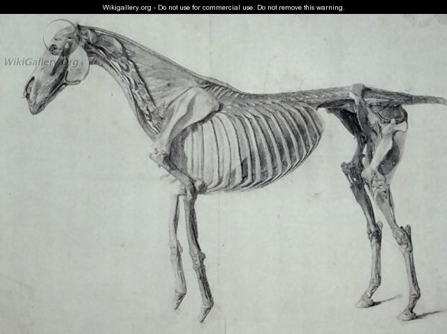Finished Study for the Fifth Anatomical Table of a Horse - George Stubbs