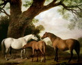 Two Shafto Mares and a Foal, 1774 - George Stubbs