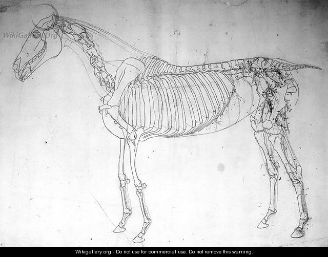 Anatomical study of a horse 2 - George Stubbs