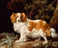 A Liver and White King Charles Spaniel in a Wooded Landscape, 1776 - George Stubbs