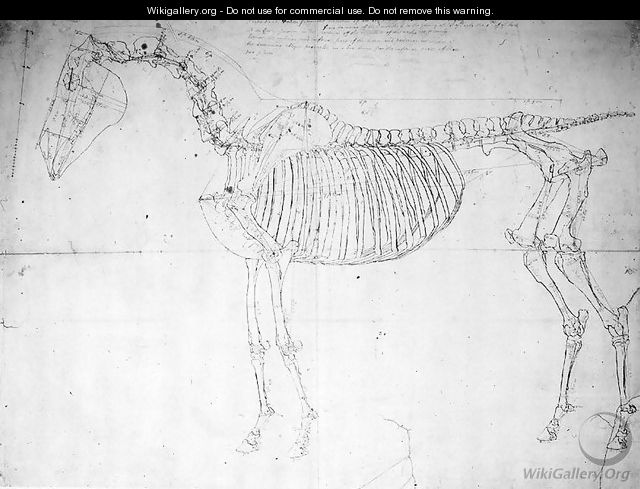 Anatomical Study Of A Horse George Stubbs Wikigallery The