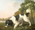 A Spaniel in a Landscape, 1771 - George Stubbs