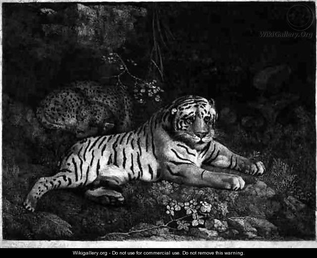 Two Tygers, engraved by the artist, pub. 1788 - George Stubbs