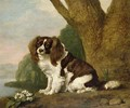 Fanny, a brown and white spaniel, 1778 - George Stubbs