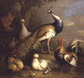 Peacock, Peahen and Poultry in a Landscape - Tobias Stranover