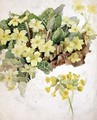 Study of Primroses and Cowslips - Laura Darcy Strutt