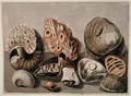 Still Life with shells and fossils - Sarah Stone