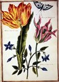 Two Broken Tulips and a Periwinkle - Nicolas Robert