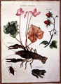 Cyclamen, Alpine Strawberry, a Lobster and a Frog - Nicolas Robert