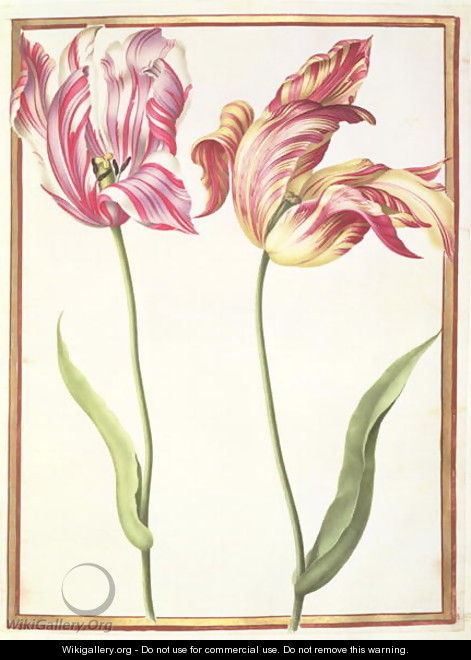 Two Broken Tulips - Nicolas Robert