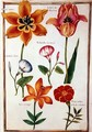 Two Tulips, Convolvulus, Lilium Bulbiferum and French Marigold - Nicolas Robert