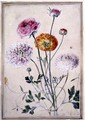Flower Study, c.1760 - Thomas Robins