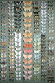 One Hundred and Fifty-eight Butterflies - Marian Ellis Rowan