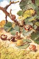 Land Snails illustration from Country Days and Country Ways - Louis Fairfax Muckley
