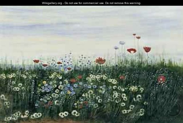 Poppies Daisies and other Flowers by the Sea - Andrew Nicholl