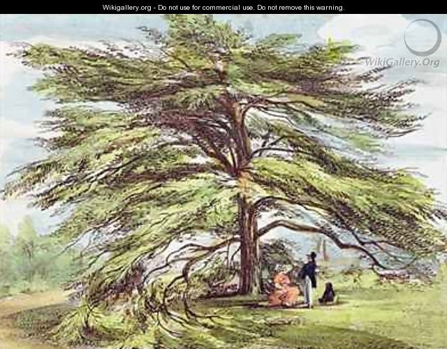 The Lebanon Cedar Tree in the Arboretum, Kew Gardens, plate 21 from Kew Gardens A Series of Twenty-Four Drawings on Stone, engraved by Charles Hullmandel 1789-1850 published 1820 - (after) Papendiek, George Ernest
