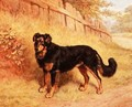 Border Collie, 1894 - Frank Paton
