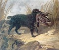 Irish Water Spaniel Retrieving a Duck - John Frederick Herring Snr
