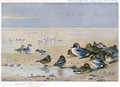 Pintail, Wigeon and Teal - Archibald Thorburn