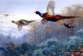 Pheasants in Flight - Archibald Thorburn