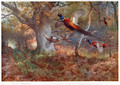 Pheasants Through the Oak Wood - Archibald Thorburn
