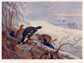 Blackgame in Winter 2 - Archibald Thorburn