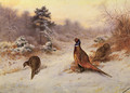 Winter's Sunset - Archibald Thorburn
