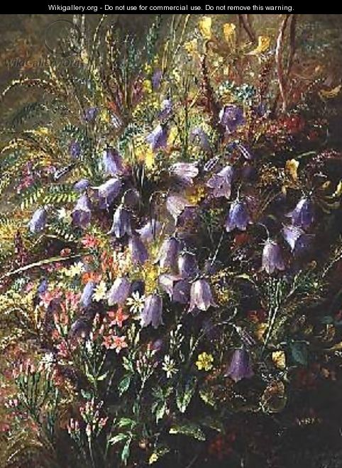 Harebells and other Woodland Flowers and Grasses - Albert Durer Lucas